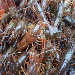墨西哥自3月15日起禁捕虾类活动